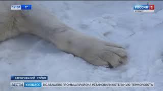 ЧП в Кемеровском районе неизвестные убивают собак