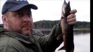 Отдых в Карелии 2016. Ч-2. Рыбалка(Отдых в Карелии, рыбалка на одном из многочисленных диких озер. Часть-2. Турбаза