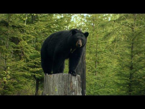 Season #5 Episode 1 British Columbia