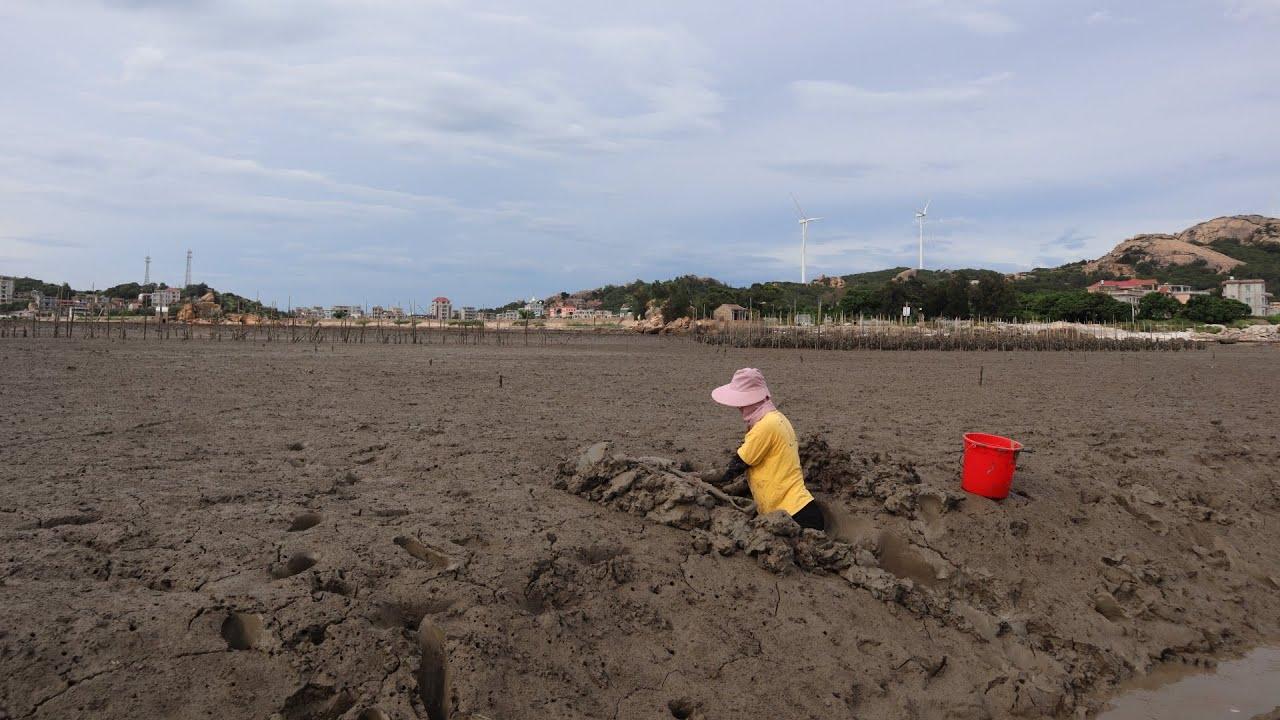 渔妹在滩涂挖出巨无霸,光洞口就挖好几米,拿铁铲去探还有乓乓声