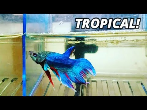 TROPICAL PET & FISH FLEA MARKET *TOUR*