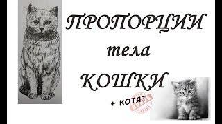ПРОПОРЦИИ тела КОШЕК, котов и КОТЯТ
