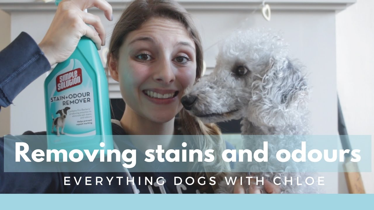 How To Get Dog Wee Stains Out Of Carpet Uk Two Birds Home