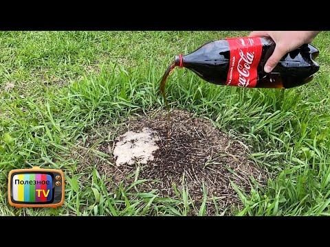 Кока Кола против