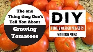 The One Thing They Never Told You About Growing Tomatoes.  The Best Tip