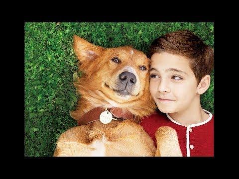 【プレゼント】すべての犬好きの夢を叶える!映画『僕のワンダフル・ライフ』クリアファイルセットを【4名様】にプレゼント!