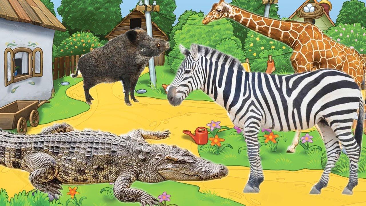 Bai 4: Động vật hoang dã và màu sắc