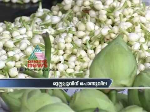 Record Price For Jasmine In Kerala