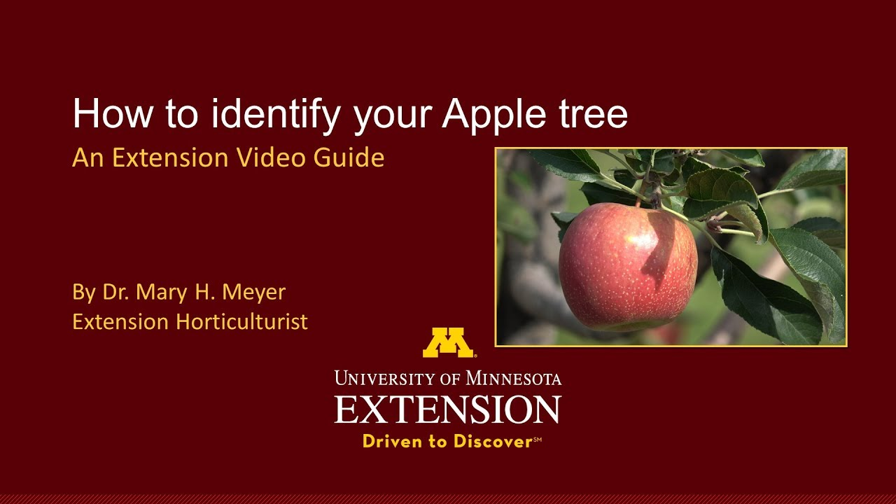 Umn Extension How To Identify Your Apple Tree Youtube