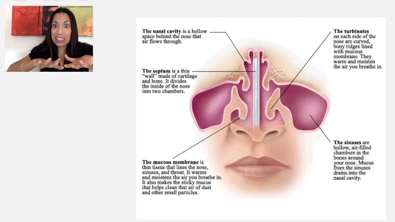 the nose and nasal cavity [ 1280 x 720 Pixel ]