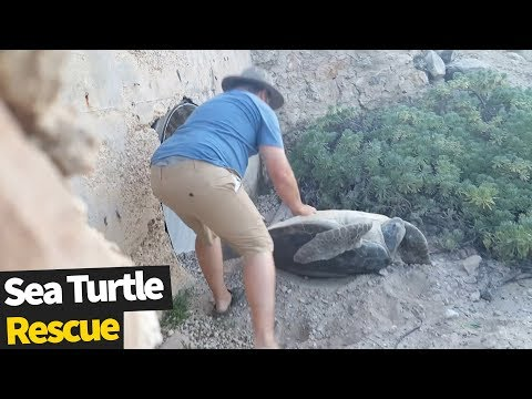 Huge Turtle Rescued After Being Stuck On Its Back | Animal Rescue