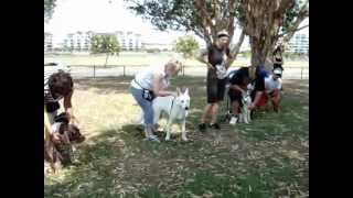 The Canine Classroom Dog Training - Group Classes On Sunshine Coast