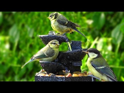 Bird Sounds at The Water Fountain on A Beautiful Evening