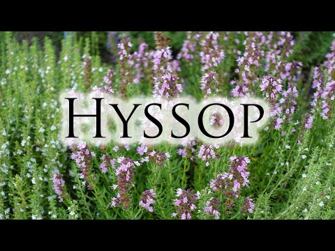 Herbs, Roots & Resins - Hyssop - YouTube
