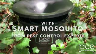 Smart Mosquito helps to save the Honeybees! - Pest Control Experts