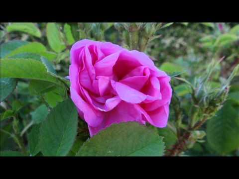 Audio - mindfulness - meditation en francais