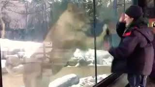 Funny videos with animals 🤣🤣🤣