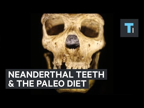 Neanderthal teeth reveal truth of the 'paleo diet'