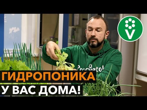 Зелень на гидропонике в домашних условиях
