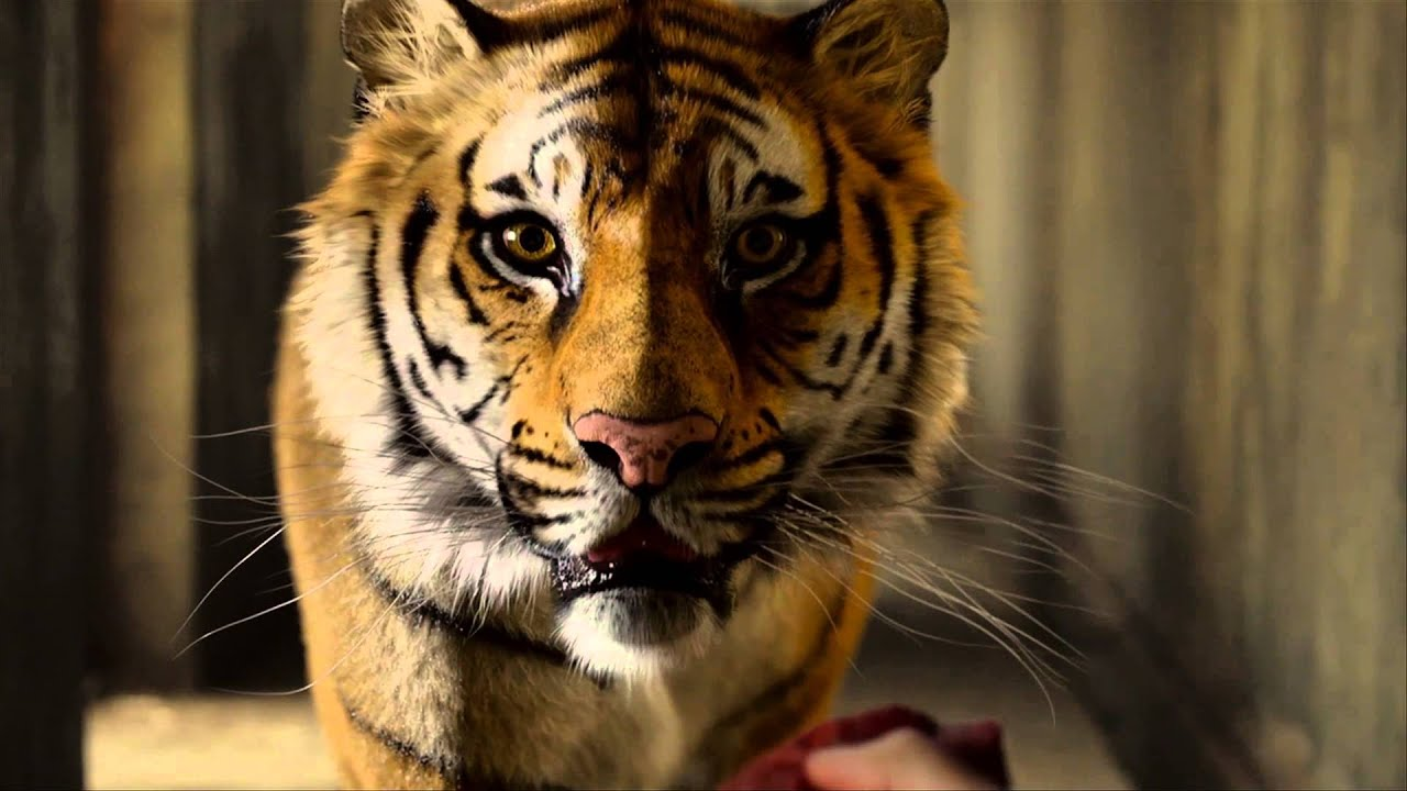 Life of pi 39 the tiger 39 clip in cinemas now youtube for Life of pi characters