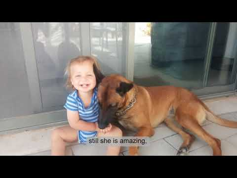 Family Protection Dogs Video