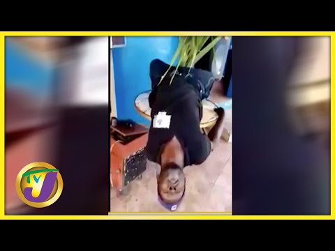 Last Dance - Man Fall to His Death | TVJ News - August 7 2021