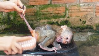 Download Lagu Oh No!! Monkey Baby Donal Cry Not Want Clean For Him mp3