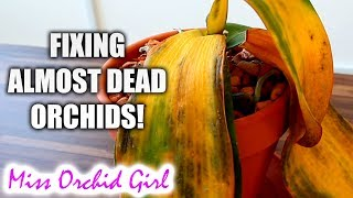 10 ways to (almost) destroy Orchids & how to fix them!