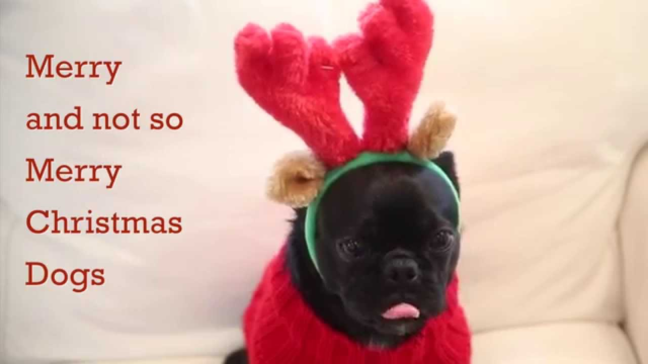 too cute dogs dressed up merry christmas youtube