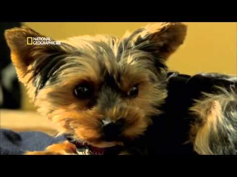 Perros Extraordinarios   Perros que detectan enfermedades 2