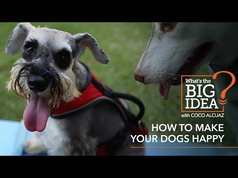 What's The Big Idea? How To Make Your Dogs Happy