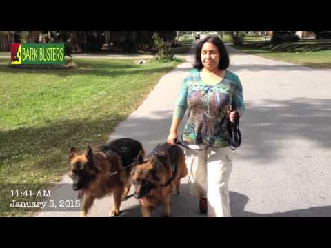 Two German Shepherd Dogs - Dog Training of Fort Myers - Patrick Logue