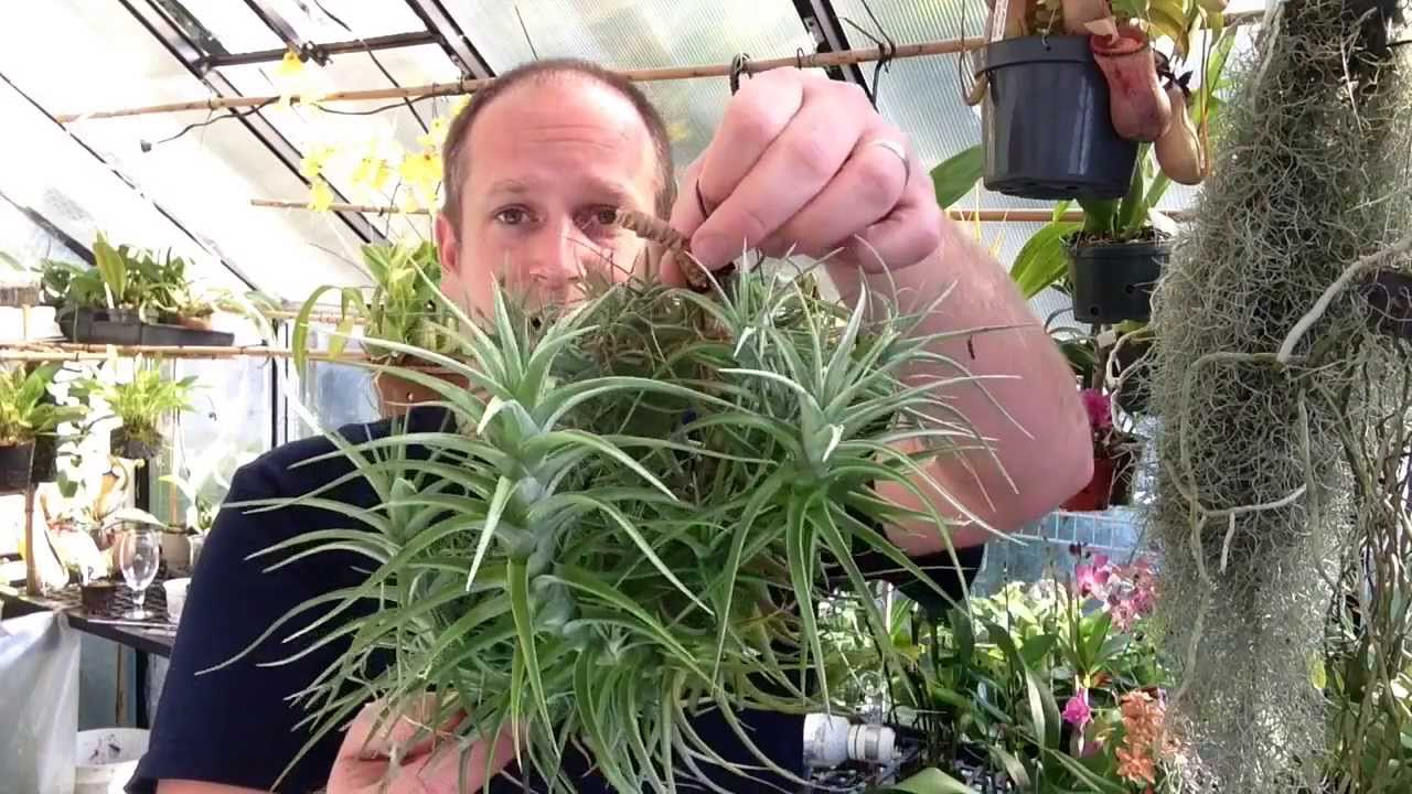 Easy To Grow Air Plants My Air Plant Tillandsia Collection Care