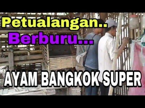 P3TUALANG4N MENC4RI 4YAM BANGKOK SUP3R..