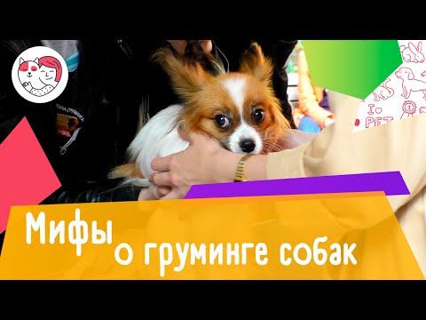 6 популярных мифов о груминге собак