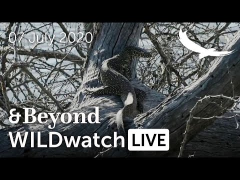 WILDwatch Live | 07 July, 2020 | Afternoon Safari | South Africa