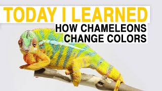 National Geographic: How Chameleons Change Color thumbnail