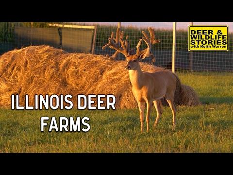 Illinois Deer Farms   Deer & Wildlife Stories
