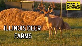Illinois Deer Farms | Deer & Wildlife Stories