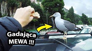 Mewa nas Obraża !!! + Ujawniam Zdjęcie w Paszporcie - Jak Wyglądam Ja, Kasia i Dzieci? (Vlog #238)