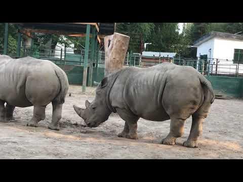 Зоопарк Алматы 2017