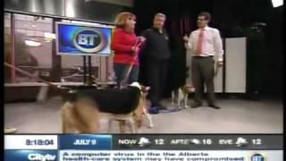 Beagle Paws On Btv