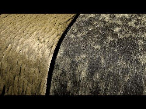 Xgen fur color variation with RenderMan