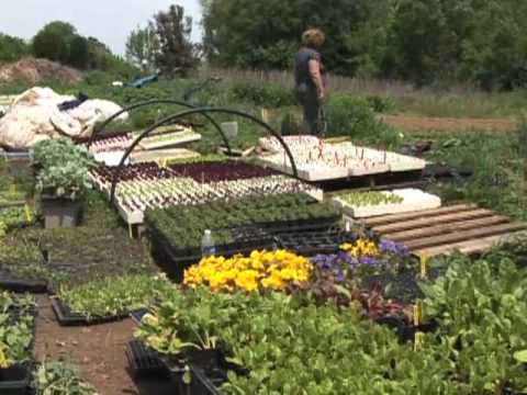 More Americans Buying Home-Grown Vegetables
