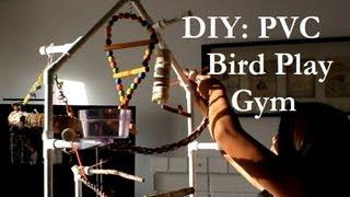 Diy: Pvc Bird Play Gym
