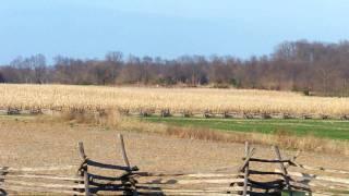 Looking North from The Cornfield Antietam National Battlefield