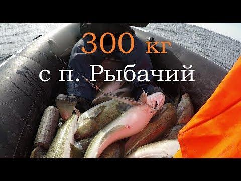 ОЧЕНЬ УДАЧНАЯ РЫБАЛКА п. Рыбачий Баренцево море