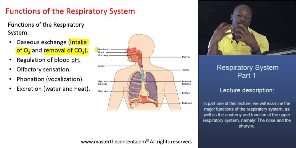Mcat The Respiratory System Part 1 Major Functions Of The
