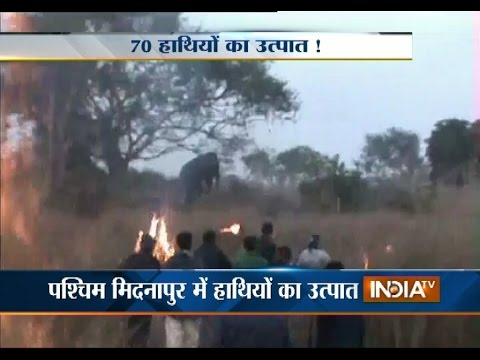 70 Elephants Destroy Crops in Paschim...