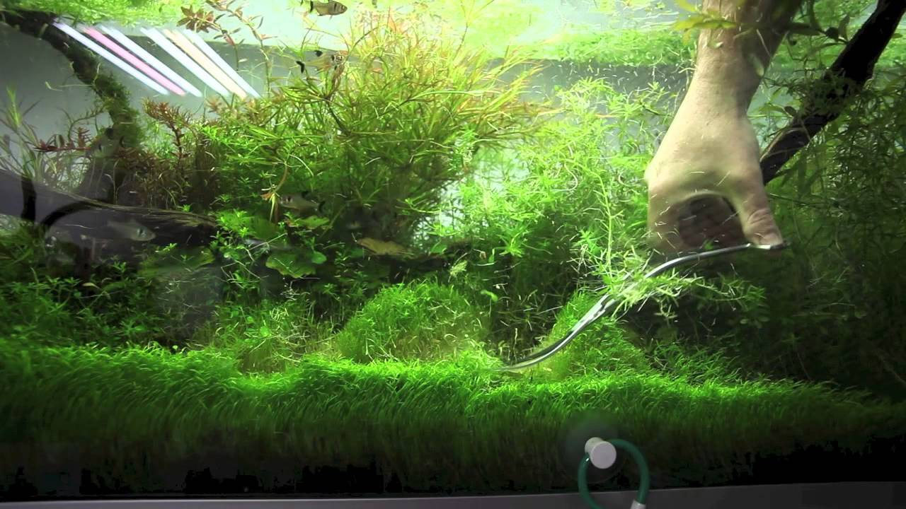 entretien et taille des plantes d 39 aquarium ada nature aquarium youtube. Black Bedroom Furniture Sets. Home Design Ideas